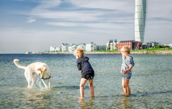 Мальчики играют с собакой. Мальмё