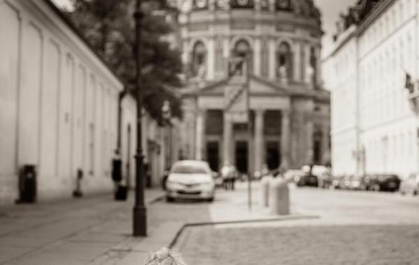 Мальчик, вид на Собор Фредерика. Копенгаген